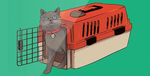 Feline Revolution illustration